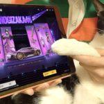 【荒野行動】猫に乃木坂46コラボガチャを1万円分引かせたら神引きしたんだがwww