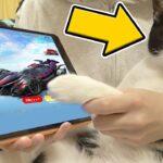 【荒野行動】猫に東京喰種コラボガチャを1万円分引かせたら神引きしたんだけどwww